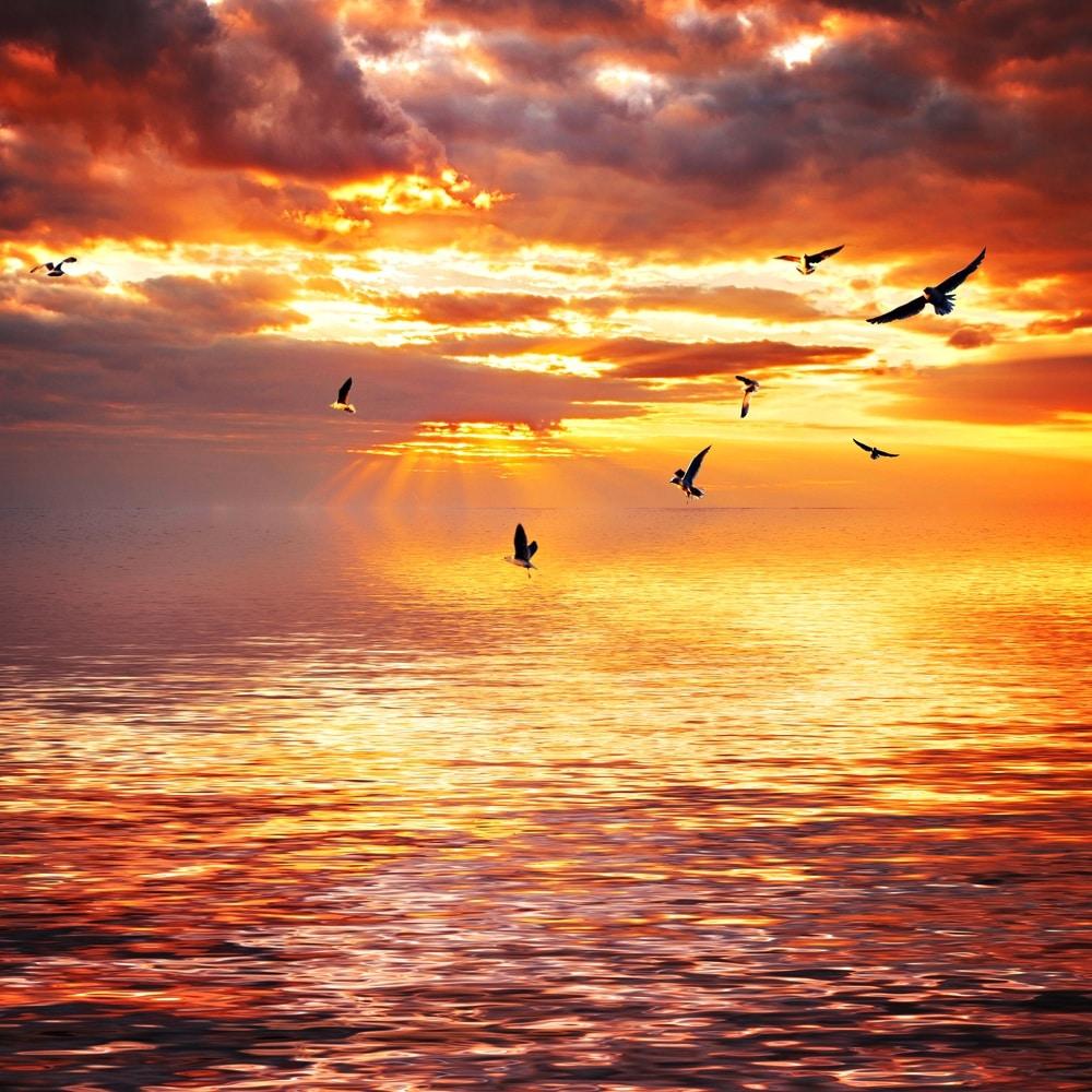sunsetss